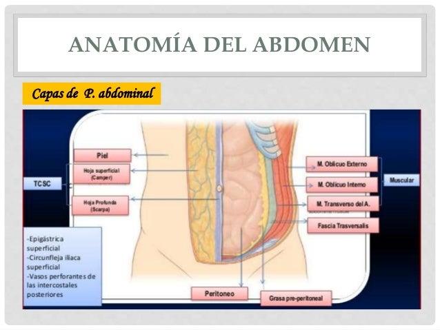 Hernias abdominales, hernia femoral hernia inguinal