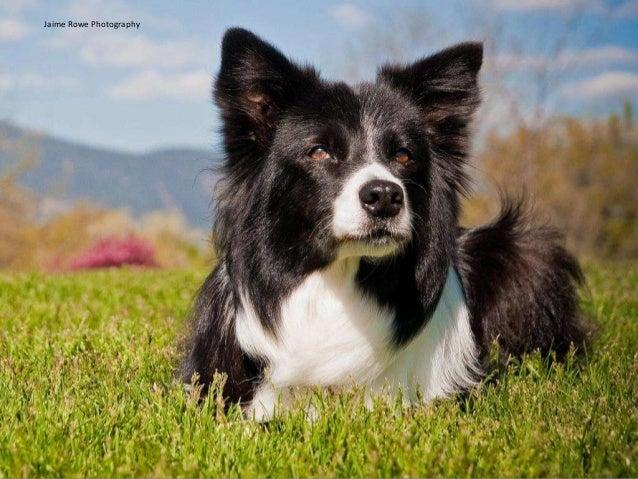 Sage Dog Rescue