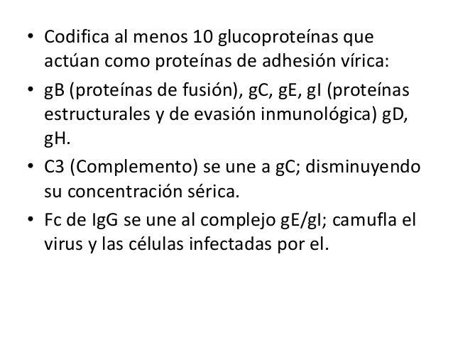 REPLICACIÓN… Interacción de glucoproteínas víricas con los receptores de la sup. celular  El genoma se replica antes de qu...