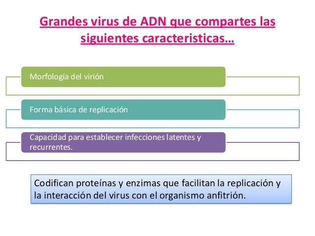 Grandes virus de ADN que compartes las siguientes caracteristicas… Morfología del virión  Forma básica de replicación Capa...