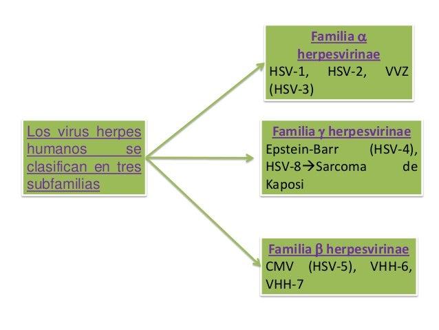 Familia a herpesvirinae HSV-1, HSV-2, VVZ (HSV-3)  Los virus herpes humanos se clasifican en tres subfamilias  Familia g h...
