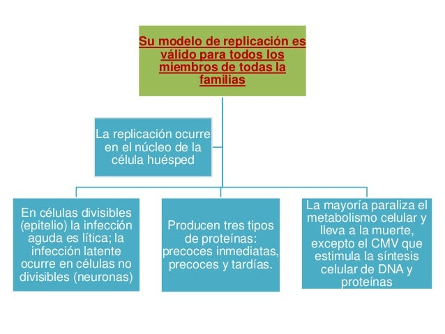 Tipo Sinónimo Subfamil Célula blanco Infecciones Sitio de Mecanismo de ia primaria latencia diseminación HSV 1 Virus Neuro...
