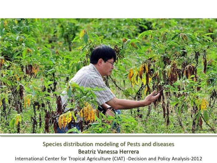 Pic:Neil Palmer, CIAT            Species distribution modeling of Pests and diseases                           Beatriz Van...