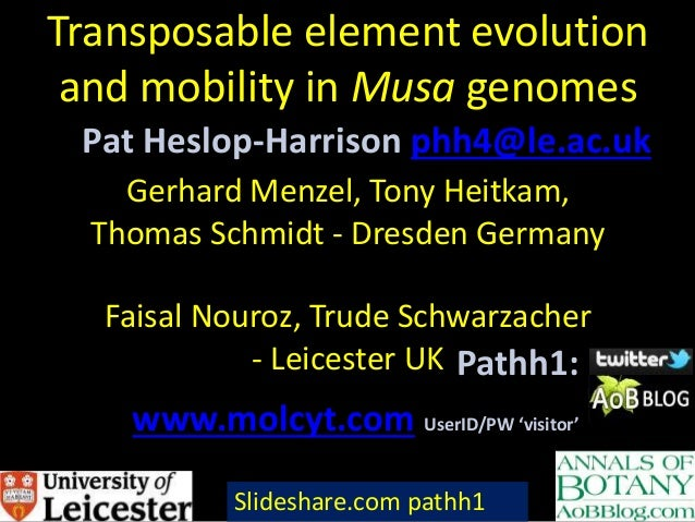 Transposable element evolution and mobility in Musa genomes Gerhard Menzel, Tony Heitkam, Thomas Schmidt - Dresden Germany...