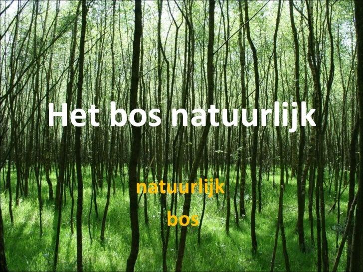 Het bos natuurlijk natuurlijk  bos