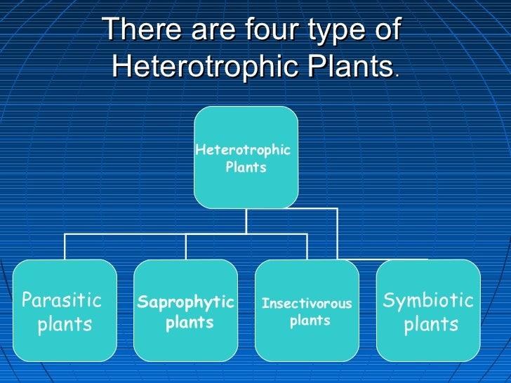There are four type of         Heterotrophic Plants.                  Heterotrophic                      PlantsParasitic  ...