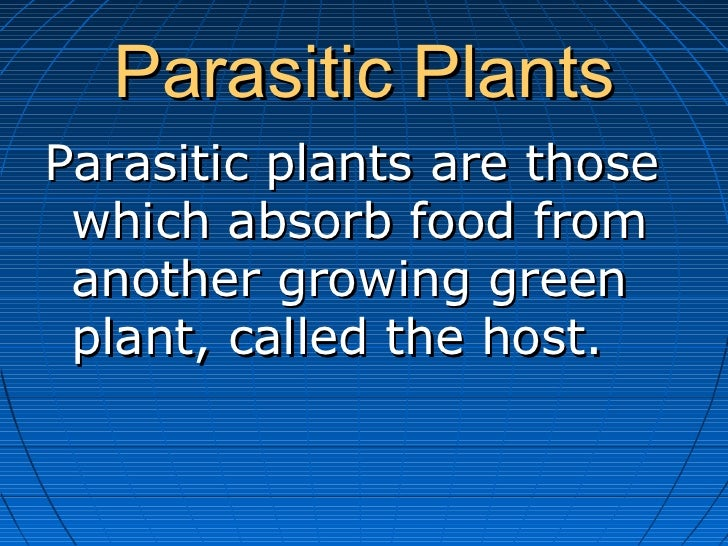 Parasitic PlantsParasitic plants are those which absorb food from another growing green plant, called the host.