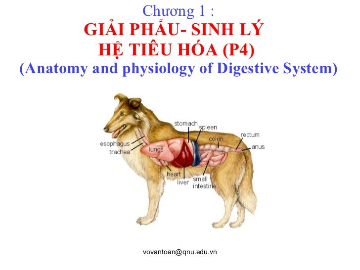 Chương 1 : GIẢI PHẨU- SINH LÝ  HỆ TIÊU HÓA (P4)   (Anatomy and physiology of Digestive System)