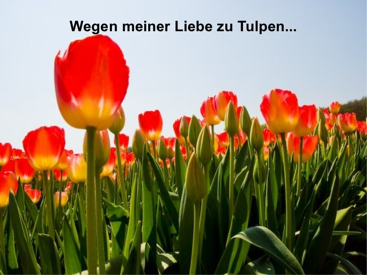 Wegen meiner Liebe zu Tulpen...