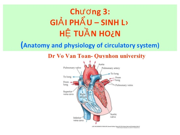 Chương 3: GIẢI PHẨU – SINH LÝ  HỆ TUẦN HOÀN ( Anatomy and physiology of circulatory system) Dr Vo Van Toan- Quynhon univer...