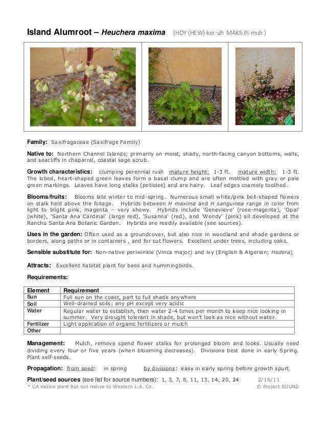 Island Alumroot – Heuchera maxima (HOY (HEW)-ker-uh MAKS-ih-muh ) Family: Saxifragaceae (Saxifrage Family) Native to: Nort...