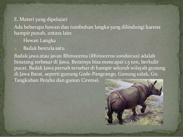 5400 Gambar Hewan Yang Hampir Punah Di Indonesia Beserta Keterangannya HD Terbaik