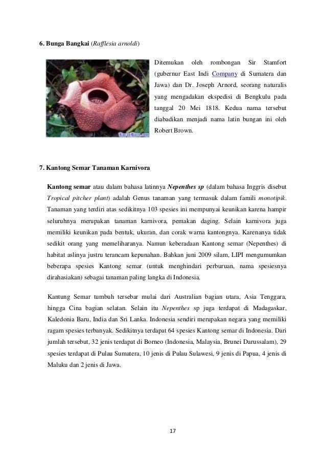 Unduh 40+ Gambar Bunga Raflesia Arnoldi Dan Penjelasannya Paling Keren