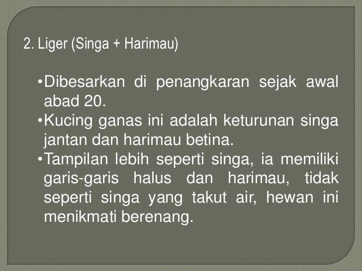 Hewan Endemik Mamamlia Di Indonesia Amp Perkawinan Silang