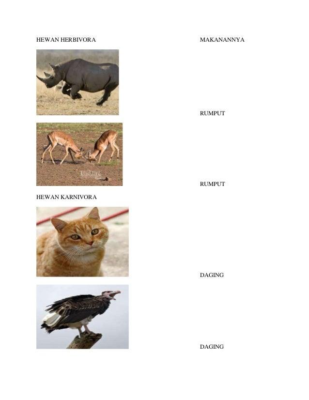85 Gambar Makanan Hewan Karnivora Gratis Terbaik