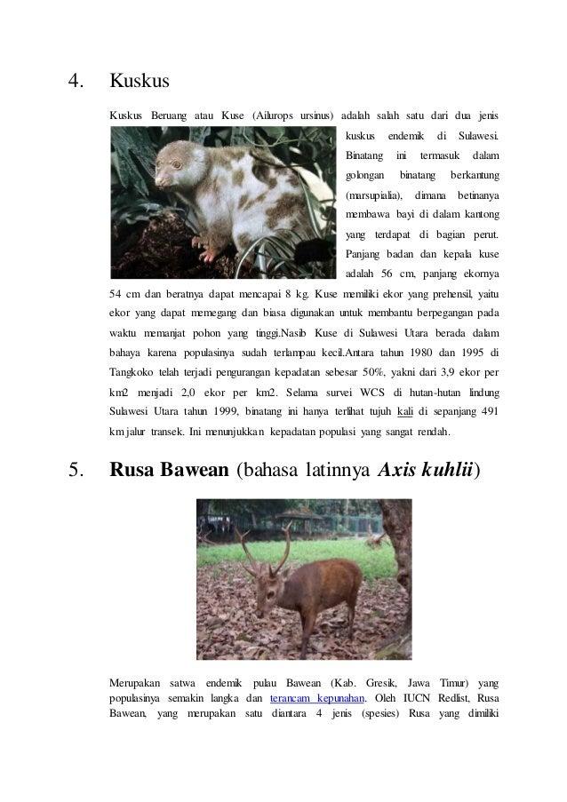 52 Gambar Hewan Langka Di Indonesia Beserta Penjelasannya Terbaik