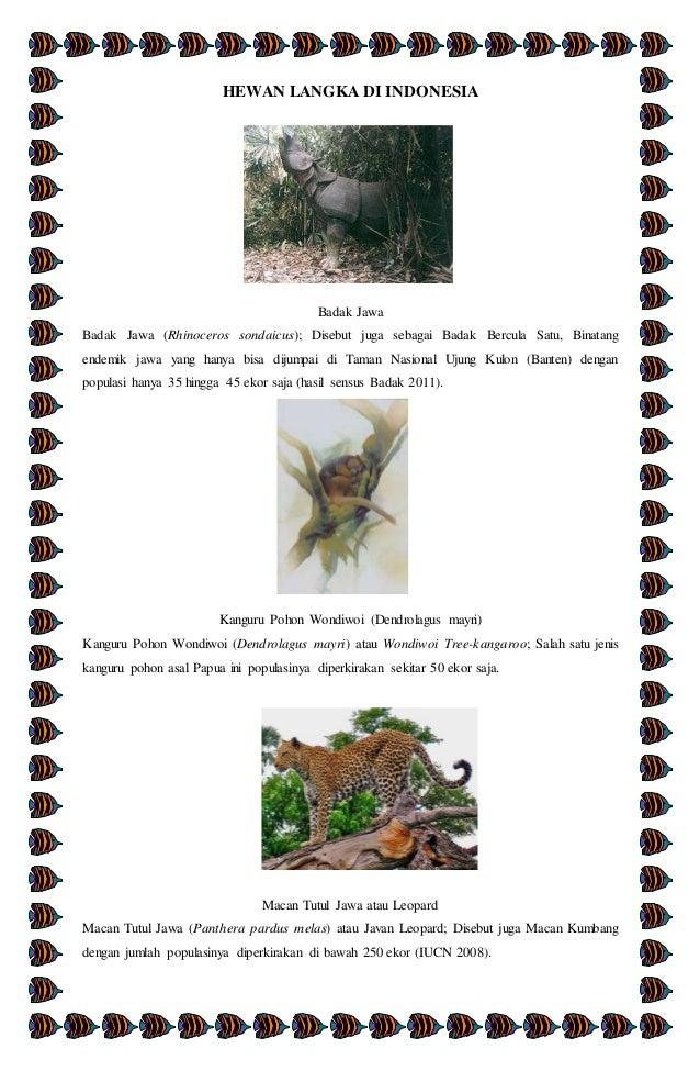 7500 Koleksi Gambar Hewan Langka Di Indonesia Beserta Asalnya HD Terbaik