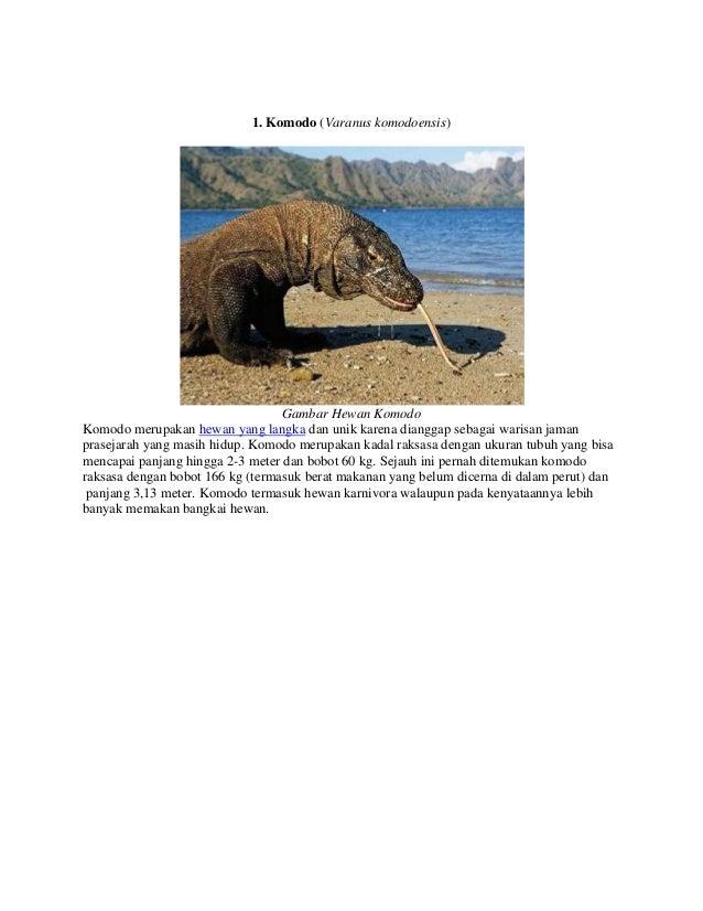 8500 Koleksi Gambar Hewan Anoa Pegunungan HD Terbaru