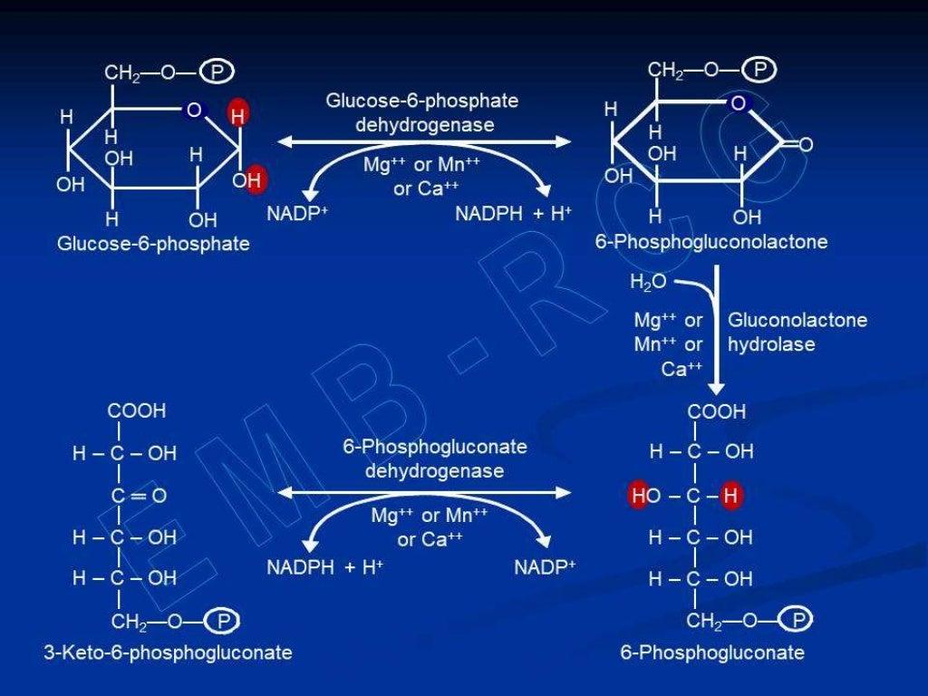 Hexose monophosphate shunt page 18