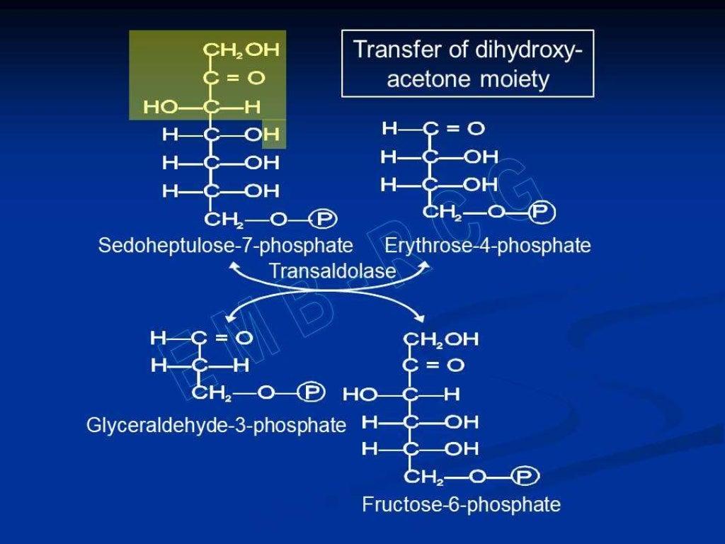 Hexose monophosphate shunt page 27