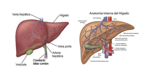 Hígado pancreas y vesicula biliar
