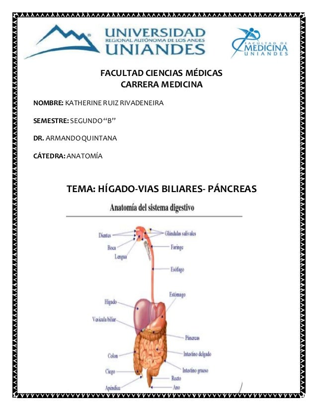 Hígado, vias biliares, pancreas