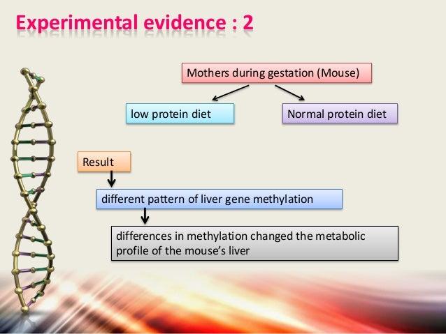 PDF SAdenosylmethionine and methylation  ResearchGate