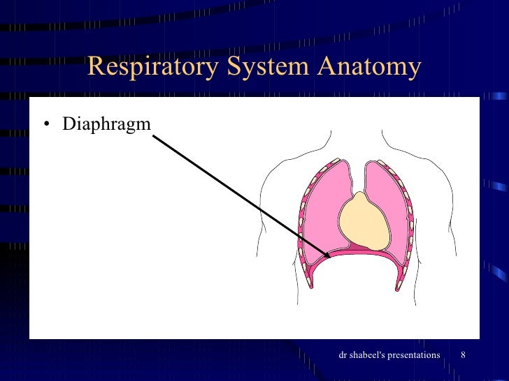 4404457 additionally 1 Heart Anatomy furthermore Drake Heather 191192 besides 10445482 also The Respiratory System 3614437. on wall of double parietal and visceral layer membrane