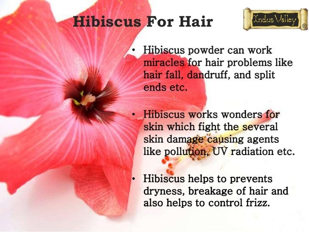 HIBISCUS FOR HAIR-CHHAYAONLINE.COMRelated image