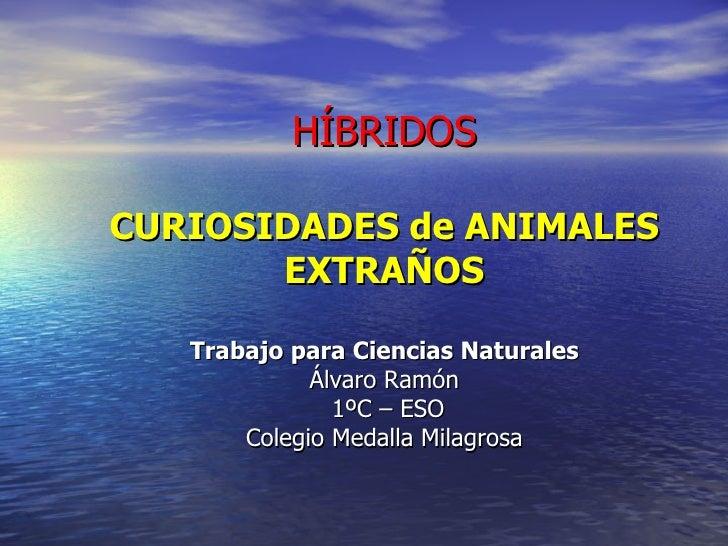HÍBRIDOS CURIOSIDADES de ANIMALES EXTRAÑOS Trabajo para Ciencias Naturales Álvaro Ramón  1ºC – ESO Colegio Medalla Milagrosa