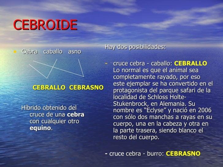 CEBROIDE <ul><li>Cebra  caballo  asno </li></ul><ul><li>CEBRALLO   CEBRASNO   </li></ul><ul><li>Híbrido obtenido del cruce...