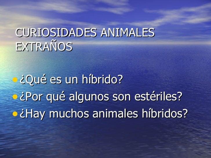 CURIOSIDADES ANIMALES EXTRAÑOS <ul><li>¿Qué es un híbrido? </li></ul><ul><li>¿Por qué algunos son estériles? </li></ul><ul...