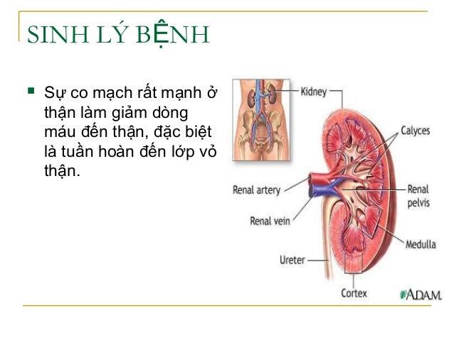 SINH LÝ B NHỆ  Sự co mạch rất mạnh ở thận làm giảm dòng máu đến thận, đặc biệt là tuần hoàn đến lớp vỏ thận.