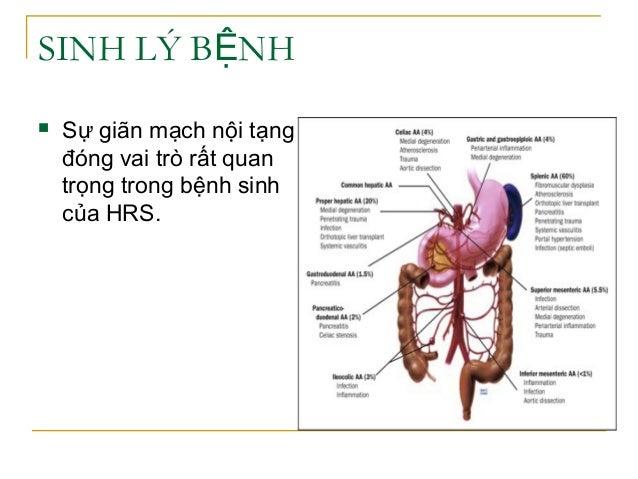 SINH LÝ B NHỆ  Sự giãn mạch nội tạng đóng vai trò rất quan trọng trong bệnh sinh của HRS.