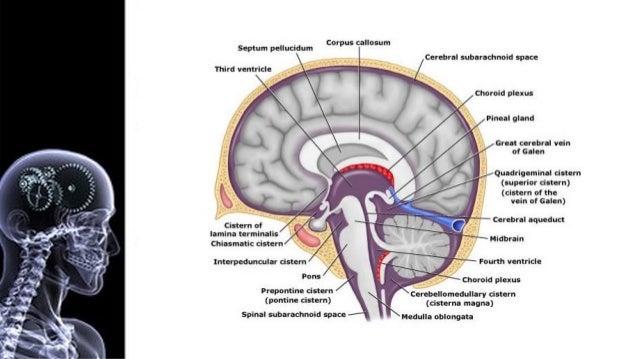 PATOGENIA • La hidrocefalia es el resultados de un desequilibrio entre la producción y la absorción de LCR. El mecanismo p...