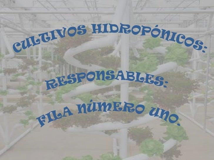 ¿QUE SON LOS CULTIVOS             HIDROPÓNICOS?es un sistema de cultivo que se basa en distintas medidas en el empleo de...