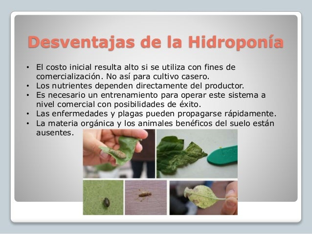 Hidroponia for Que es la asociacion de cultivos