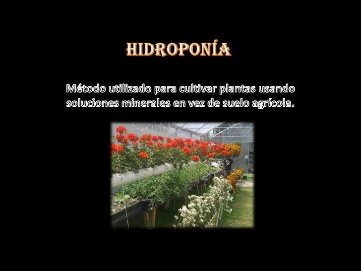 Hidroponia 01