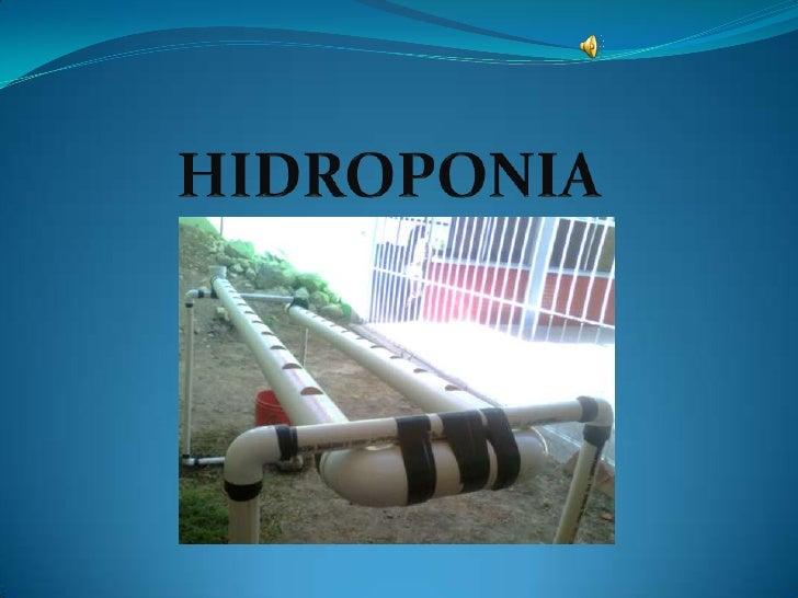 ¿Qué es hidroponía? La      palabra hidroponía      deriva del griego, a saber,    hidro: agua;   ponia: trabajo, labor, ...