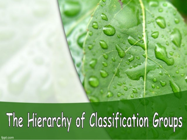 IntroductionBiological classification,or scientificclassification in biology,is a method of scientifictaxonomy used to gro...
