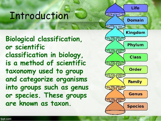 Hierarchy of Classification Groups - Biology