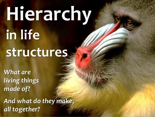Hierarchy in life structures  What are living things made of?  And what do they make, all together?