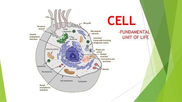 Cell Organization Gallery