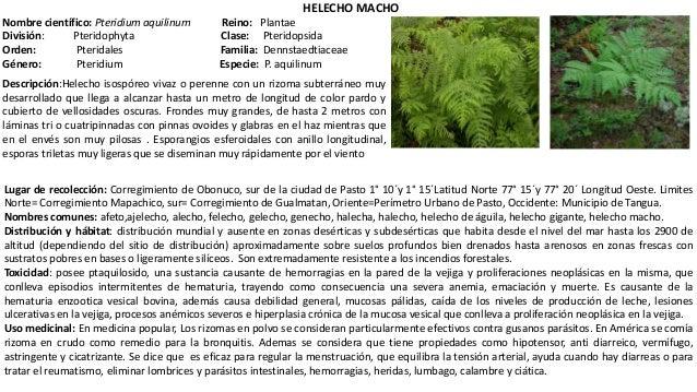 Plantas toxicas de clima frio for Planta ornamental helecho nombre cientifico