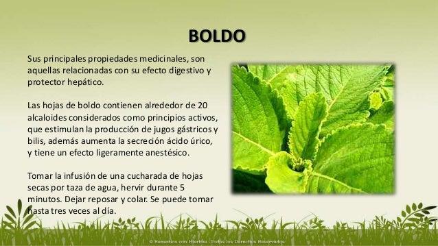Hierbas medicinales para el h gado for Hierbas y plantas medicinales