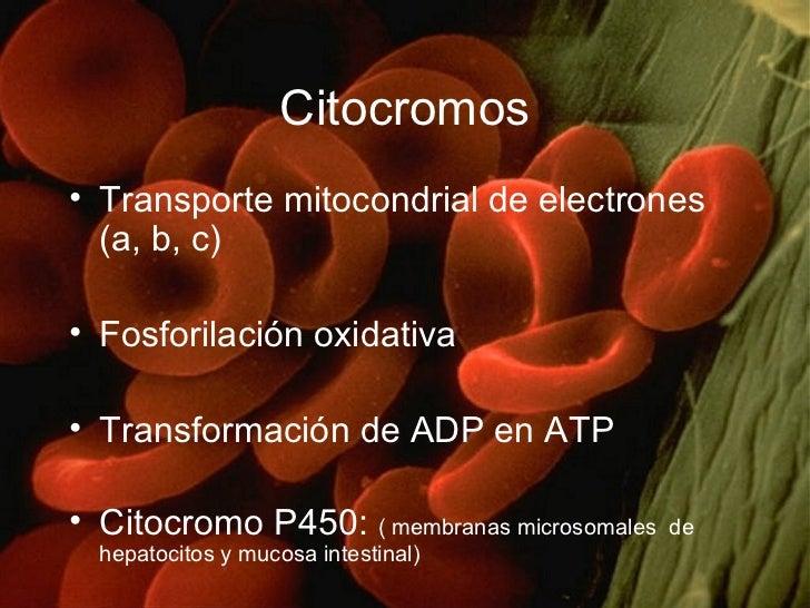 Citocromos <ul><li>Transporte mitocondrial de electrones (a, b, c) </li></ul><ul><li>Fosforilación oxidativa </li></ul><ul...