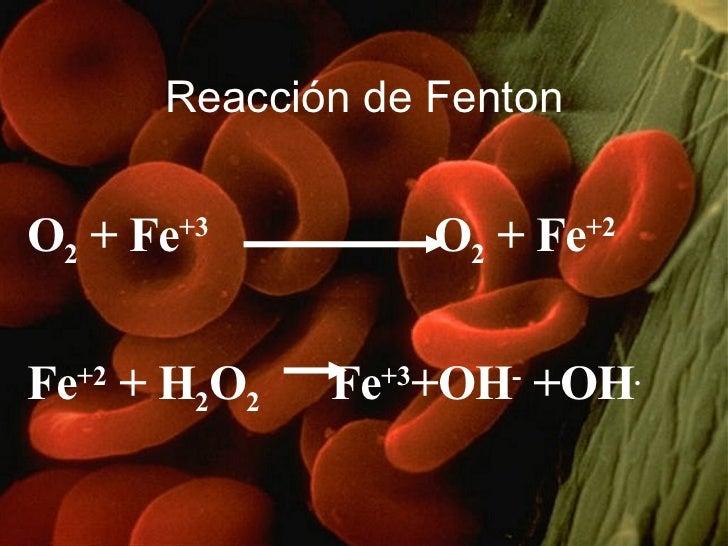 Reacción de Fenton <ul><li>O 2  + Fe +3   O 2  + Fe +2 </li></ul><ul><li>Fe +2  + H 2 O 2   Fe +3 +OH -  +OH . </li></ul>