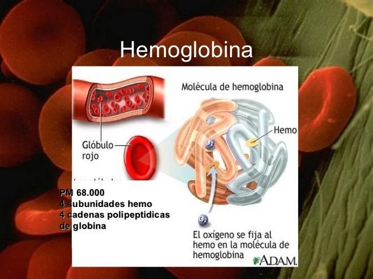 Hemoglobina PM 68.000 4 subunidades hemo 4 cadenas polipeptídicas  de globina