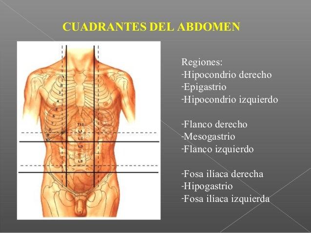 ANATOMIA HUMANA II - HIGADO - DR. F. FARFÁN