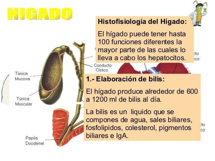 Histofisiología del Hígado:  El hígado puede tener hasta 100 funciones diferentes la mayor parte de las cuales lo lleva a ...